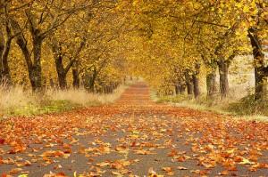 Autumn, Five Oaks Drive, Oregon